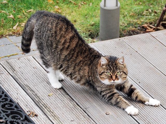 cat-215294_640